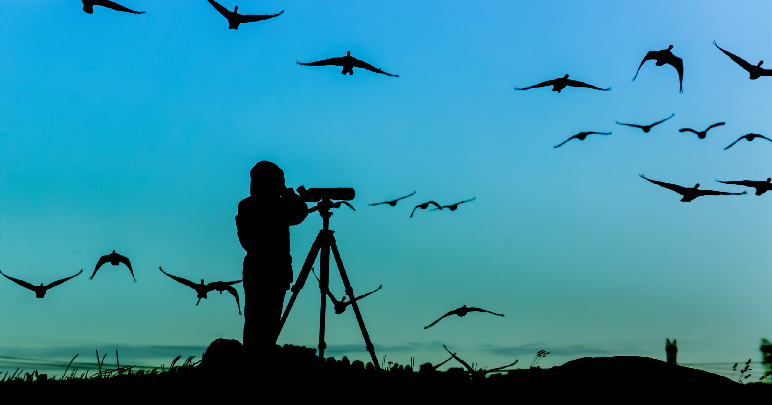 Silhouette of a person bird-watching at dusk | bird-watching near Hanover, MD